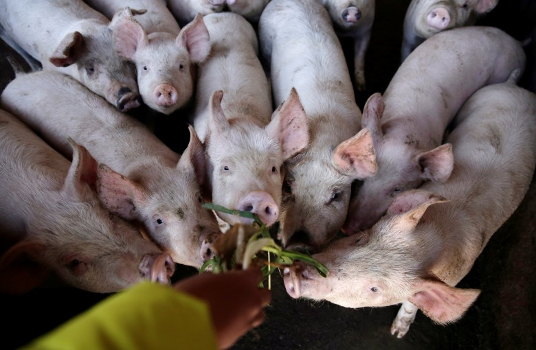 Armed to fight drones, China's pig farmers busted for disrupting flights