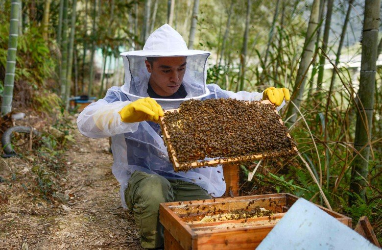 Beekeeper in China strikes gold with live-streaming