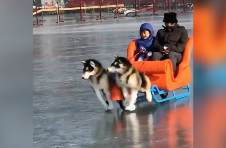These electric 'dog' sleds are now a thing in Beijing