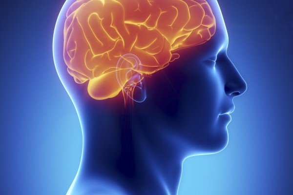 The brain is the human organ that's more complicated than any structure in the universe. It is extraordinary in its ability and its uniqueness from person to person. Photo: Shutterstock