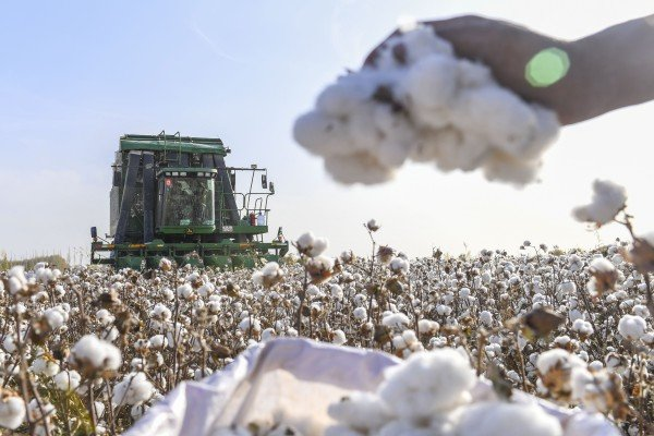 Hong Kong's Esquel Group is seeking to remove its Xinjiang-based unit from a US blacklist over allegations of forced labour. The Xinjiang region produces about 85 per cent of China's cotton and about a fifth of the global cotton supply. Photo: Xinhua