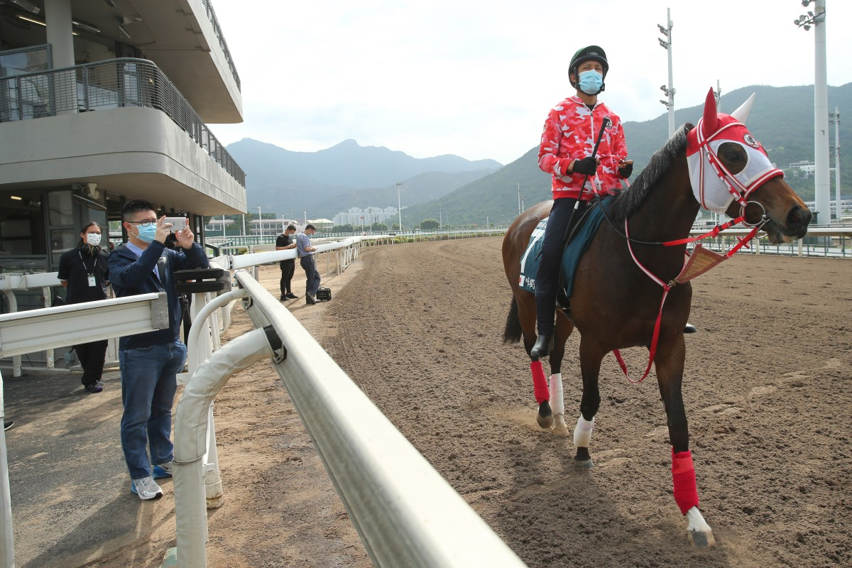 Loves Only You walks around at Sha Tin on Tuesday morning. Photos: Kenneth Chan
