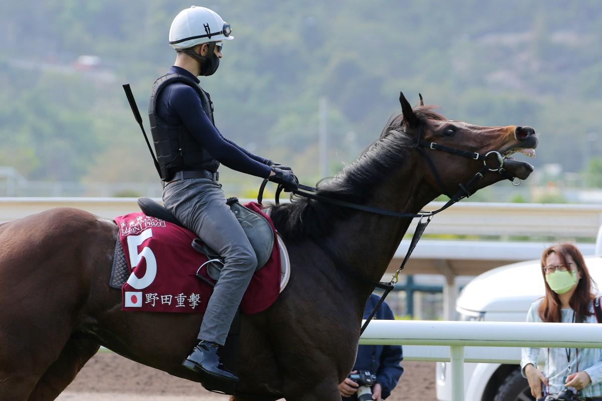 Joao Moreira walks Danon Smash back to his stable after trackwork at Sha Tin. Photos: Kenneth Chan