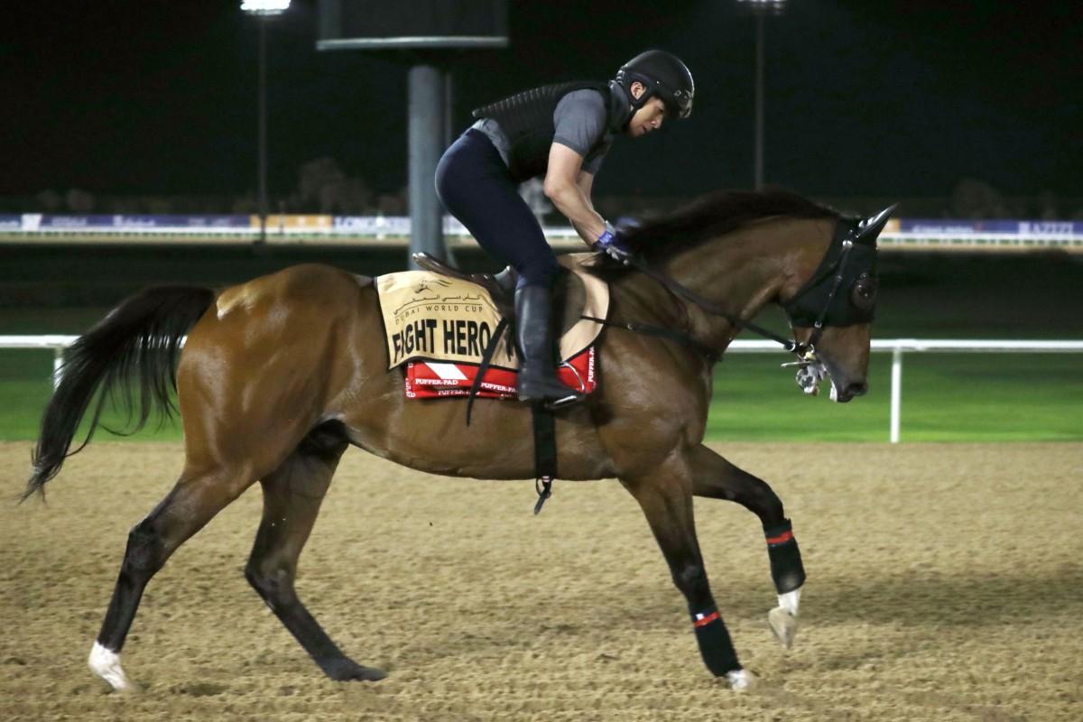 Fight Hero gallops at Meydan on Thursday morning. Photos: Kenneth Chan