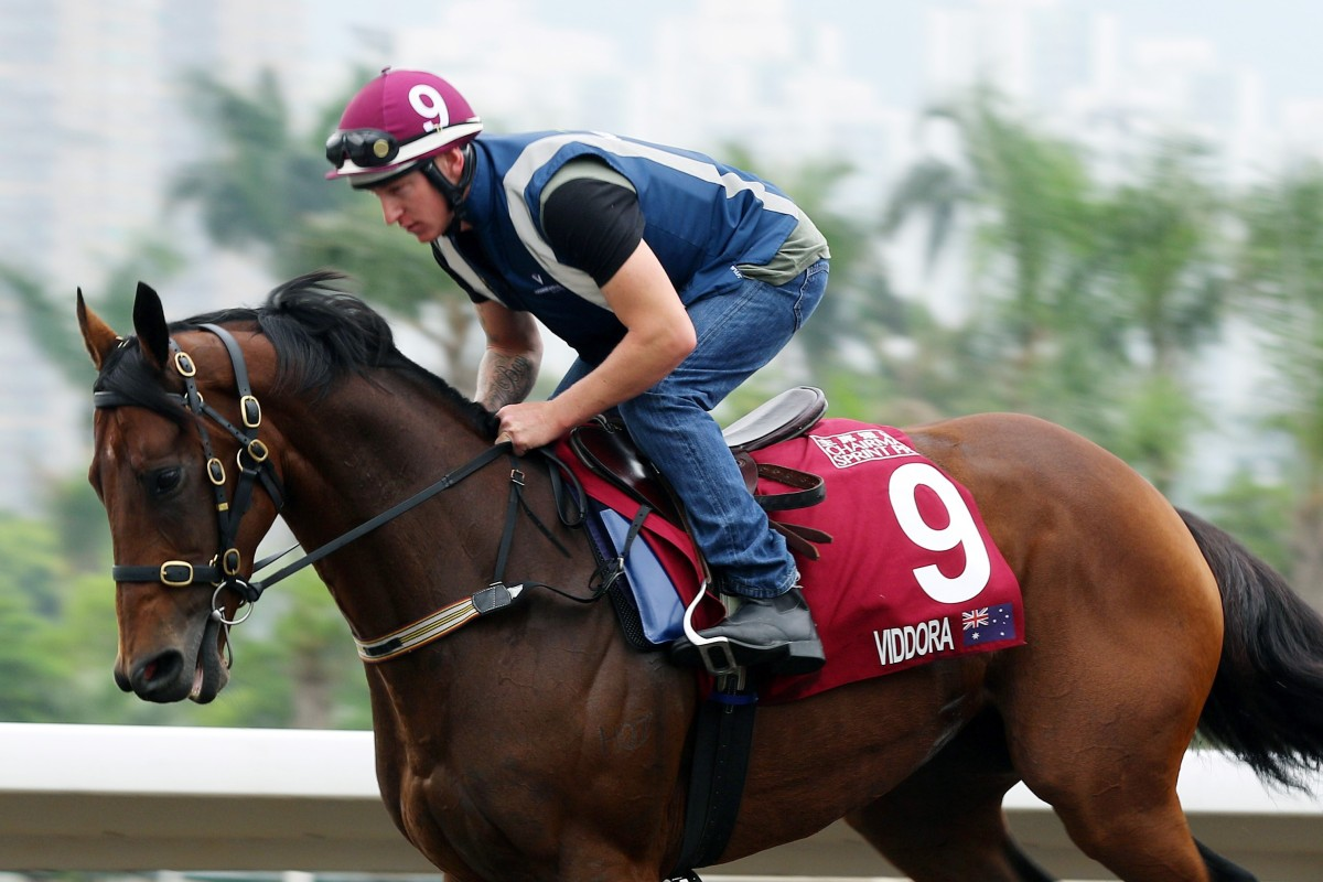 Viddora canters around the Sha Tin all-weather track under rider Paddy Bell in the lead up to the Group One Chairman's Sprint Prize (1,200m). Photos: Kenneth Chan