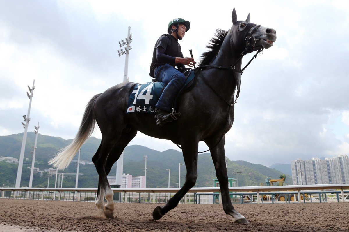 Win Bright works on the all-weather track at Sha Tin on Tuesday morning. Photos: Kenneth Chan