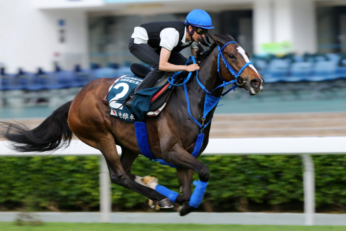 QEII Cup runner Deirdre ridden by Yutaka Take galloping on the turf at Sha Tin. Photo: Kenneth Chan