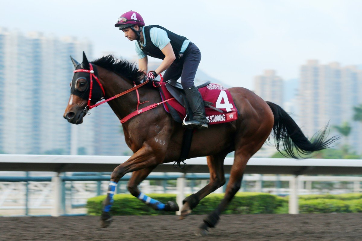 Mr Stunning gallops on the all-weather track on Thursday. Photos: Kenneth Chan