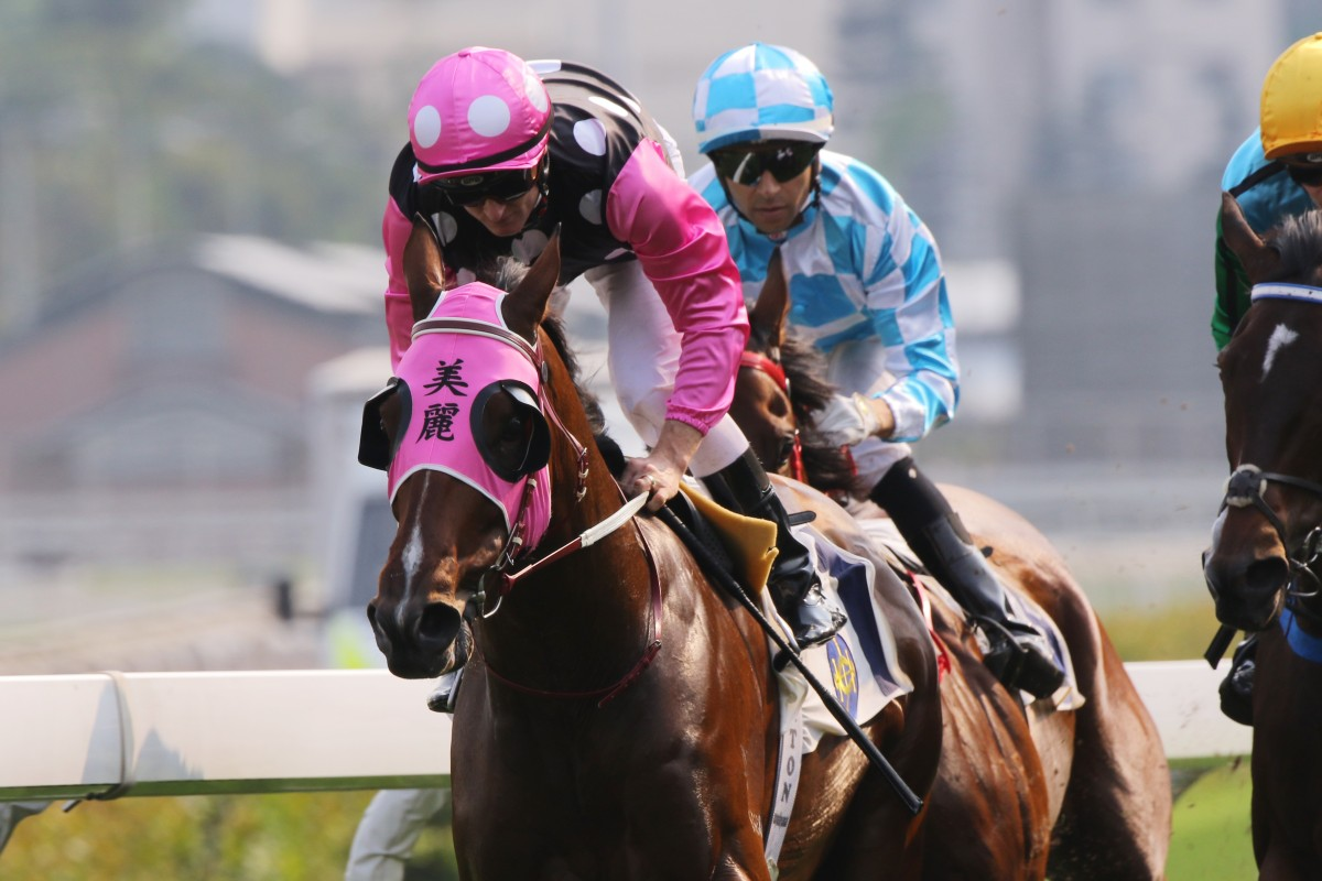 Beauty Generation is out to make it nine wins in a row at Sha Tin on Sunday. Photos: Kenneth Chan