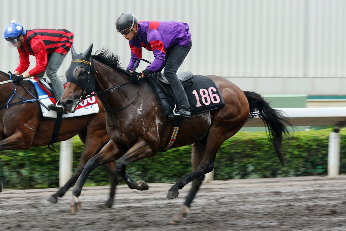 Fight Hero trials at Sha Tin last month. Photos: Kenneth Chan