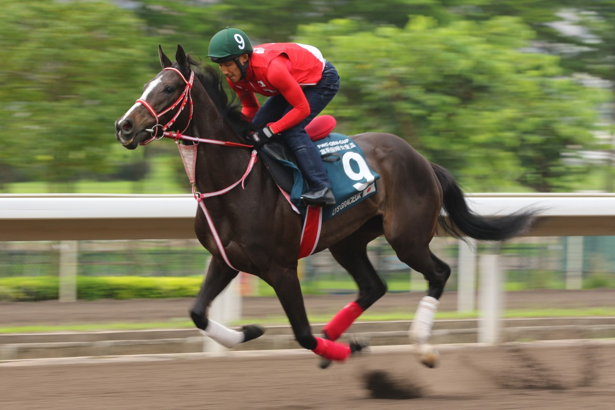 Lys Gracieux gallops at Sha Tin ahead of one of her Hong Kong runs. Photo: Kenneth Chan