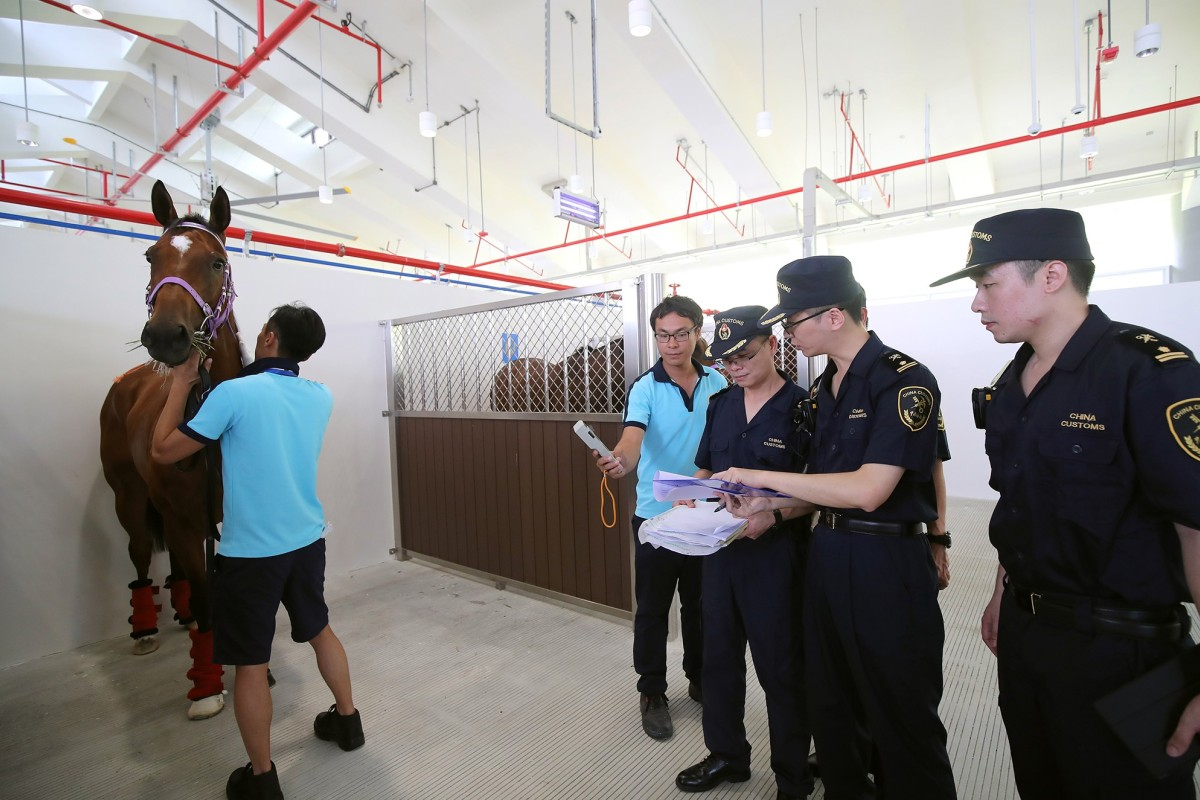 A horse gets inspected by quarantine officials at Conghua. Photo: HKJC