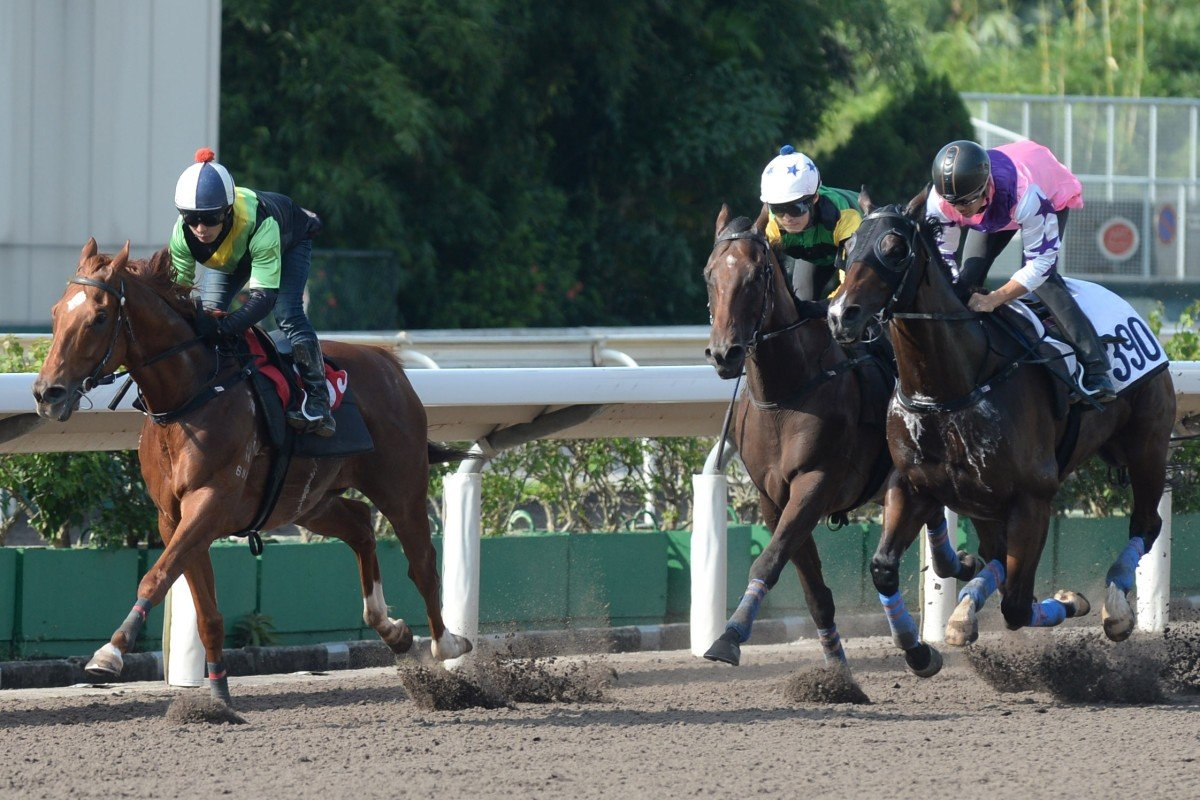 Ugly Warrior (left) wins a barrier trial at Sha Tin on August 21. Photos: Kenneth Chan