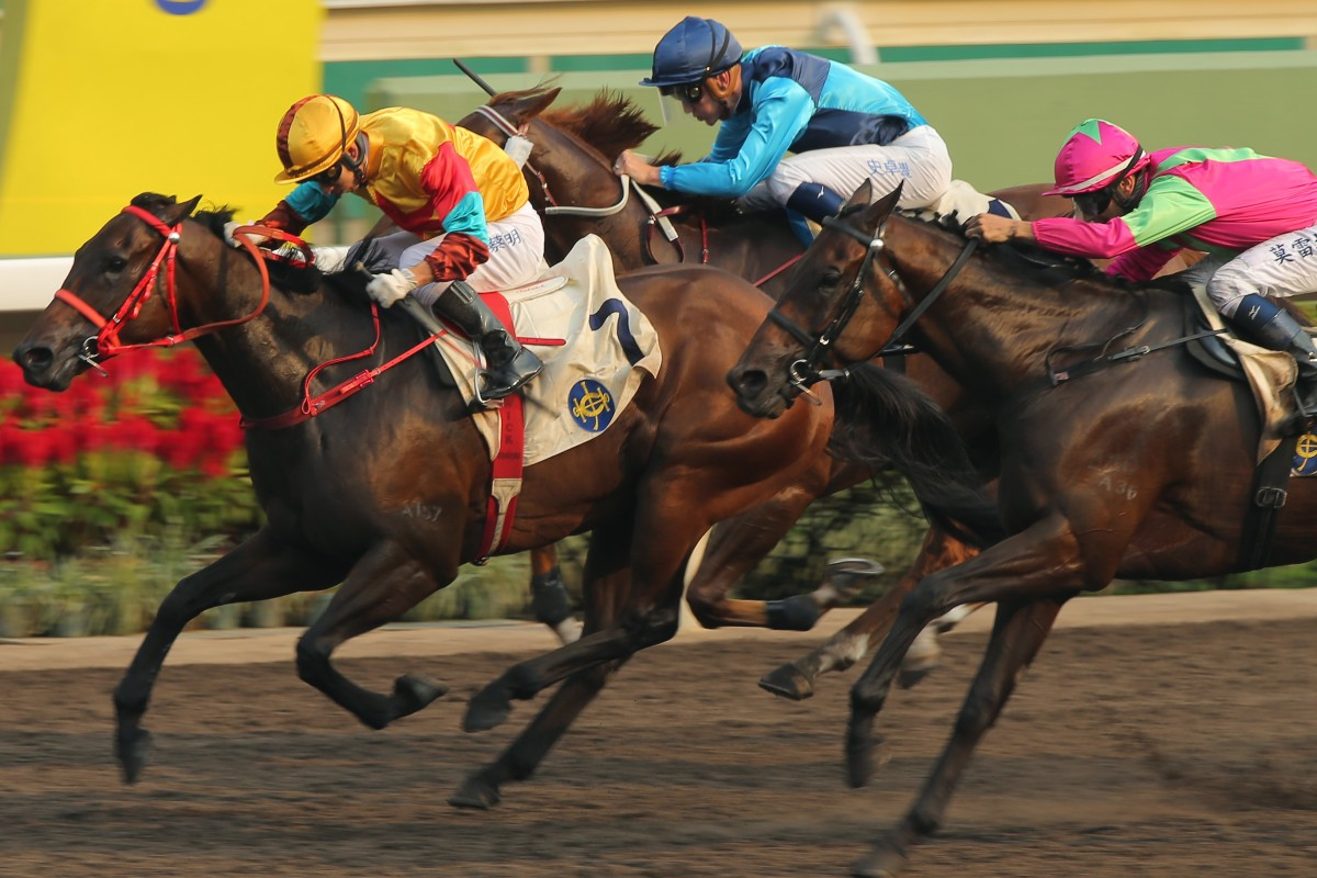 Elusive State (pink silks) runs a close second to Big Time Baby (yellow) on Sunday. Photos: Kenneth Chan