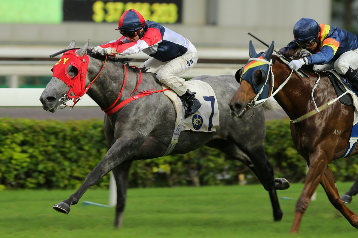 Racing Fighter hits the line to win at Sha Tin in June. Photos: Kenneth Chan
