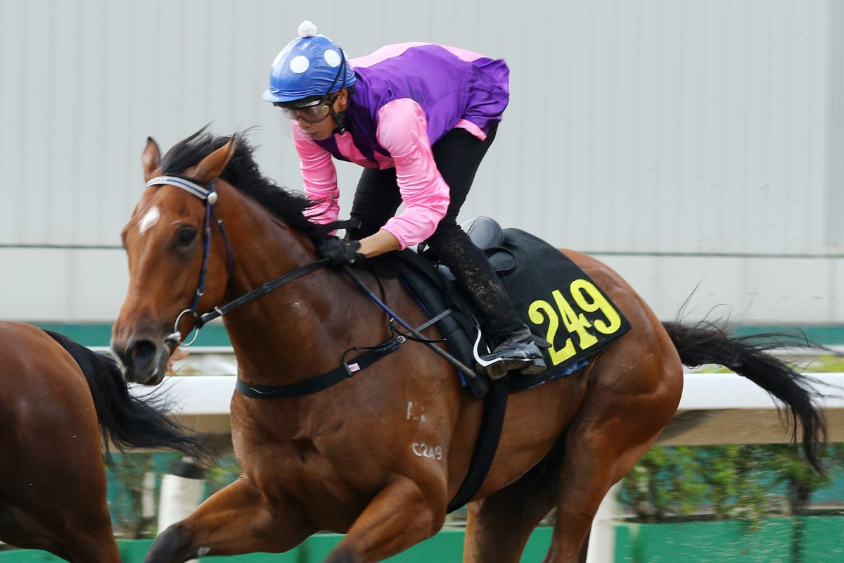 Vincent Ho trials King's Race at Sha Tin earlier this month. Photos: Kenneth Chan