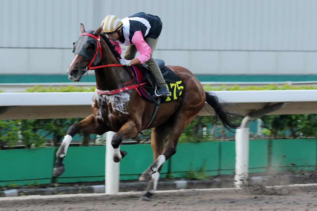 Beauty Rush wins a barrier trial at Sha Tin on September 10. Photos: Kenneth Chan