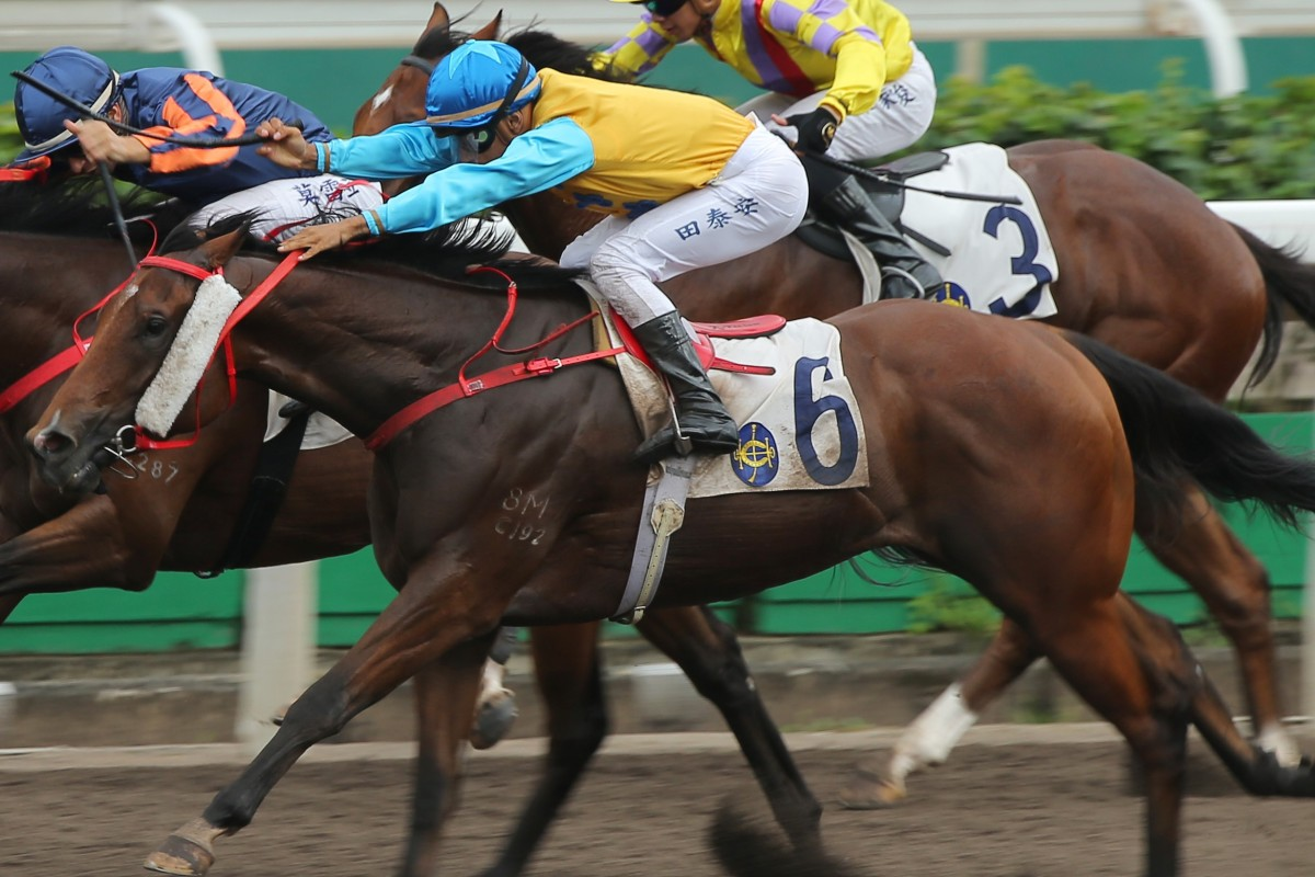 Coby Oppa wins in Class Three grade on the all-weather surface at Sha Tin. Photos: Kenneth Chan