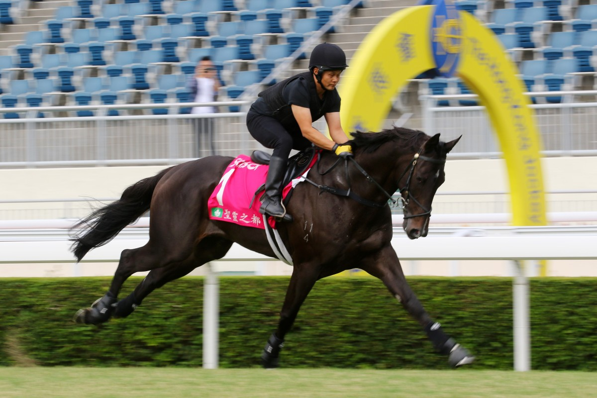 Sacred Capital gallops at Sha Tin on Thursday morning. Photos: Kenneth Chan