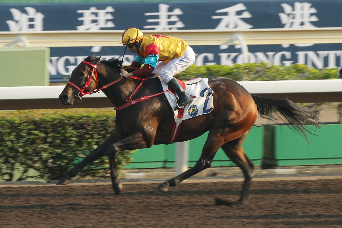 Big Time Baby salutes with ease at Sha Tin on Sunday. Photos: Kenneth Chan