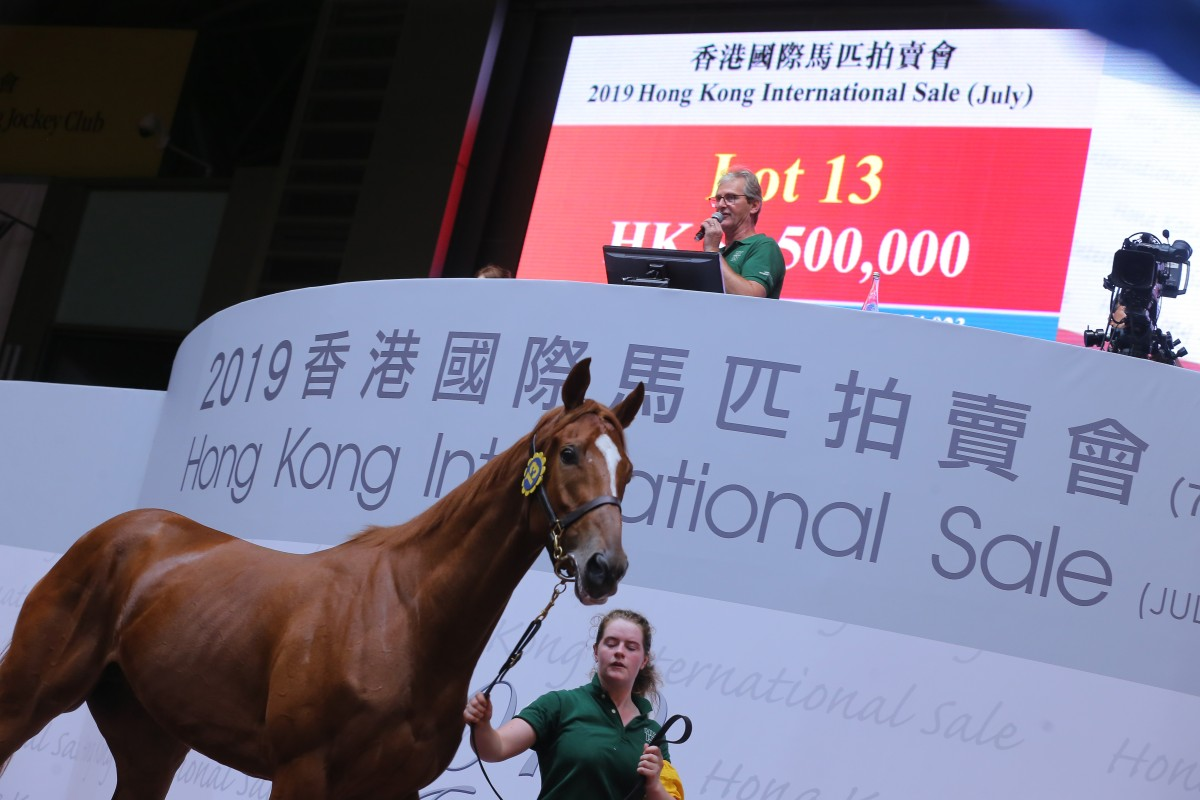 A horse goes through the Hong Kong International Sale in July. Photos: Kenneth Chan