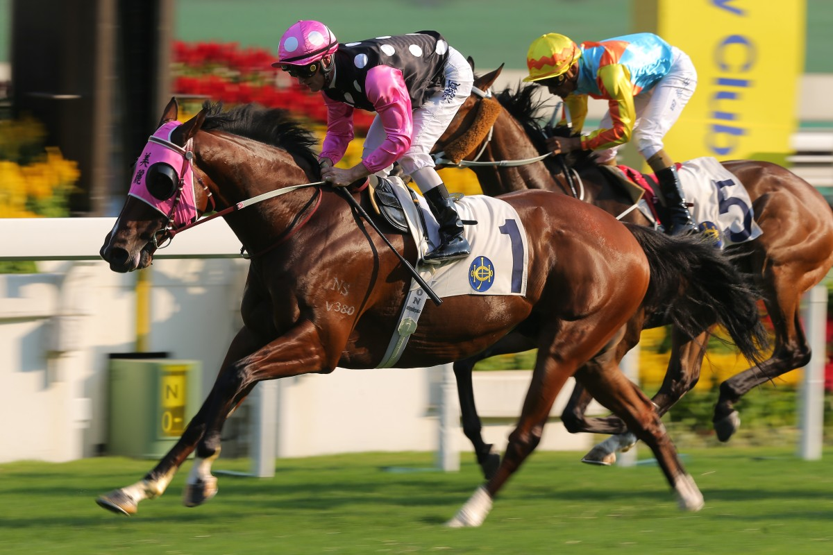 Beauty Generation returns to the racetrack in next Sunday's Stewards' Cup. Photos: Kenneth Chan