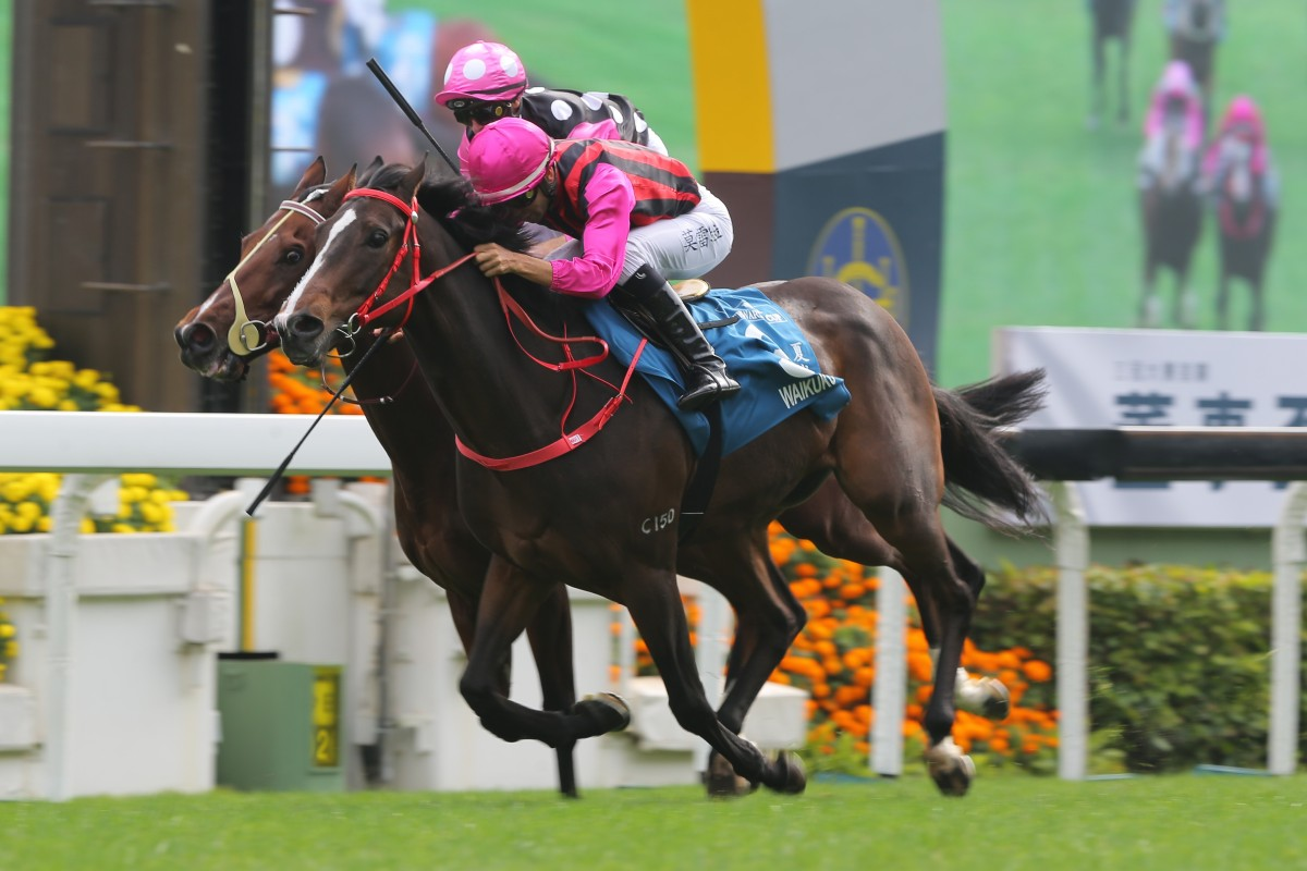 Waikuku wins the Group One Stewards' Cup in January. Photos: Kenneth Chan