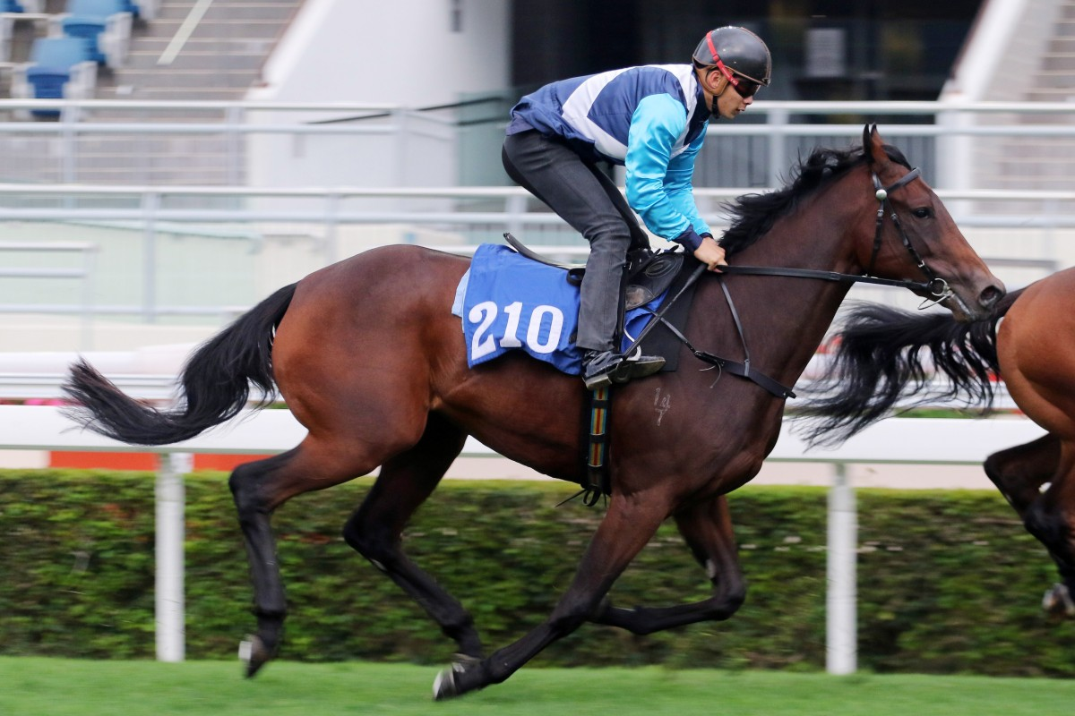 Tinker Belle trials at Sha Tin ahead of her Hong Kong debut. Photos: Kenneth Chan