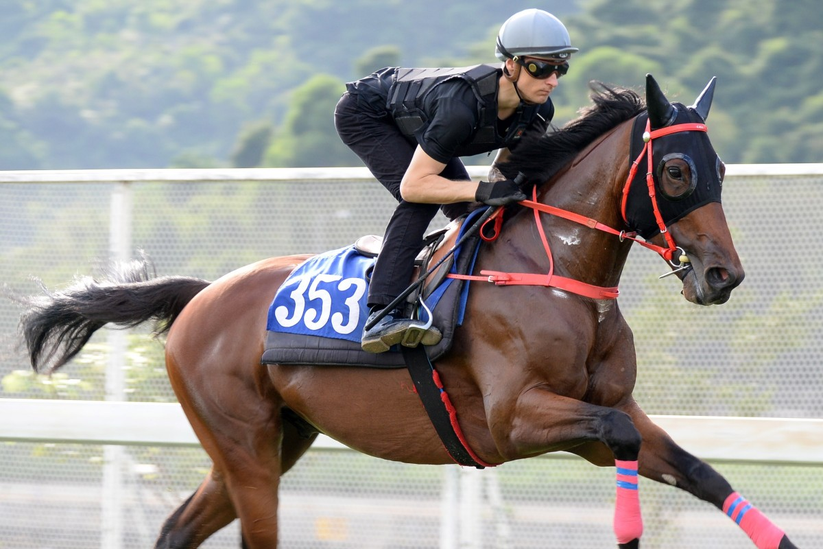 Hongkong Great gallops at Sha Tin on Thursday morning under jockey Blake Shinn. Photos: Kenneth Chan