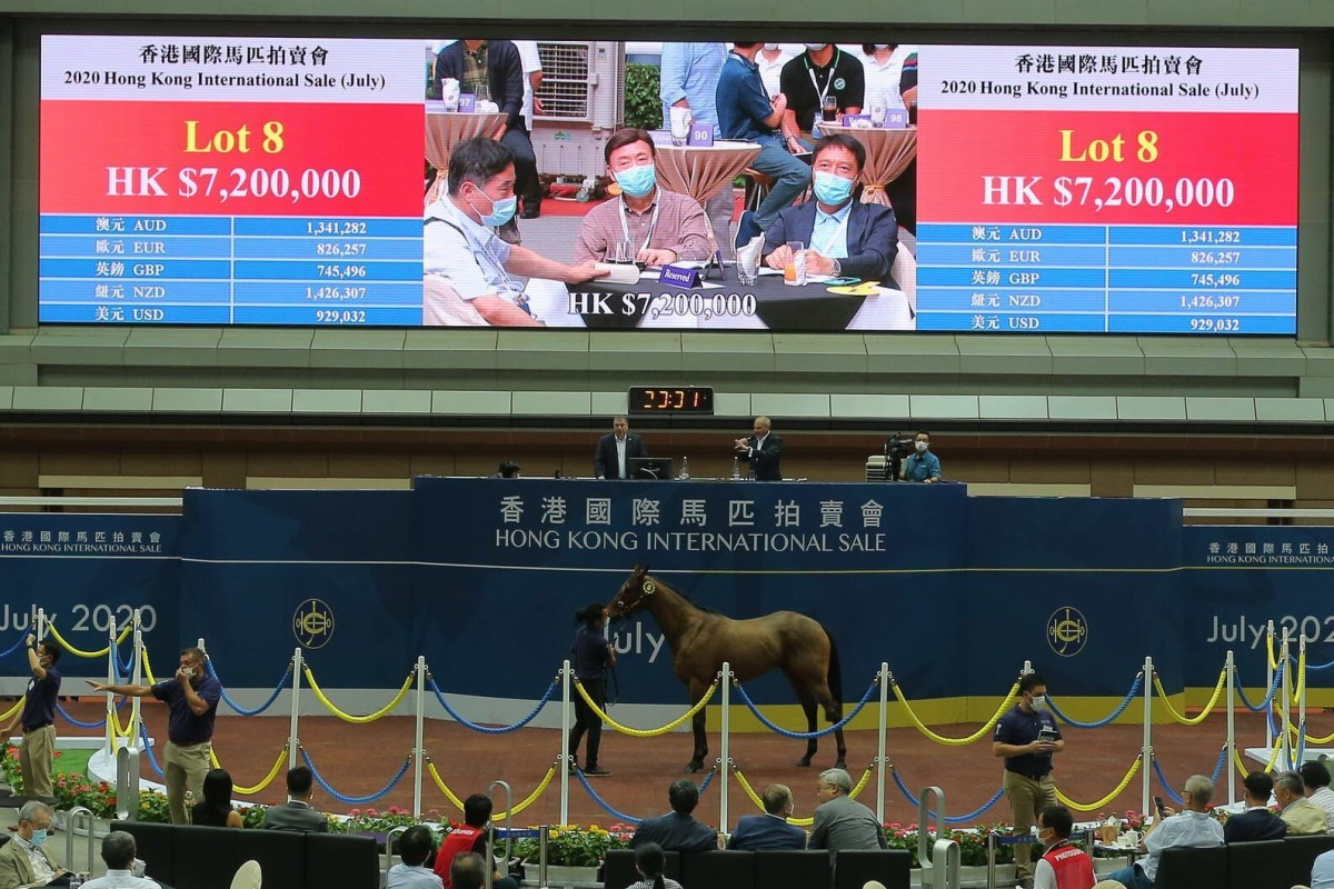 Lot 8 goes under the hammer for HK$7.2 million at Friday night's Hong Kong International Sale (July) at Sha Tin. Photo: Kenneth Chan