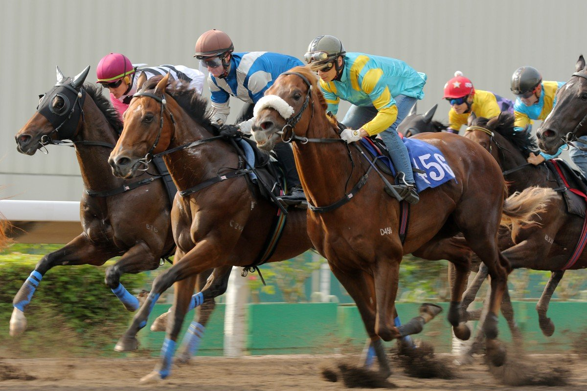 Beauty Day (left), Lobo's Legend (middle) and Maximus (right) hit the line in a barrier trial on the all-weather track at Sha Tin. Photos: Kenneth Chan