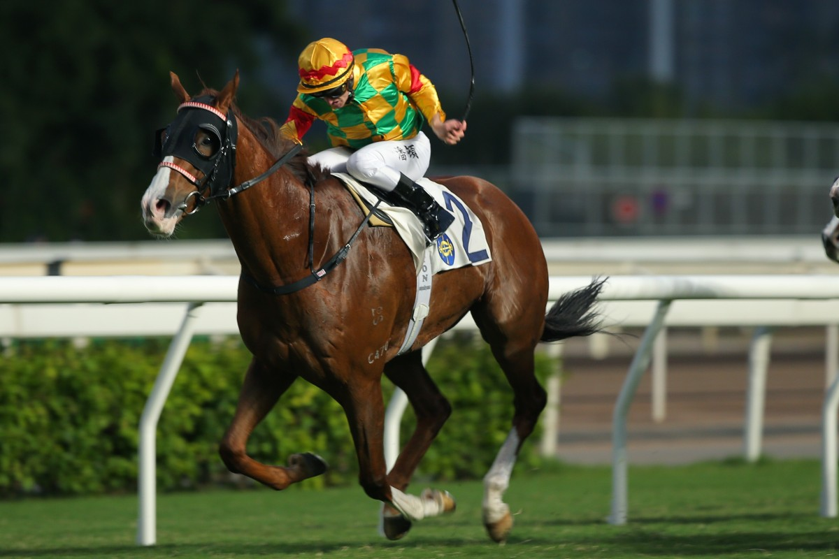 Mighty Giant digs deep to salute at Sha Tin on Saturday afternoon. Photos: Kenneth Chan