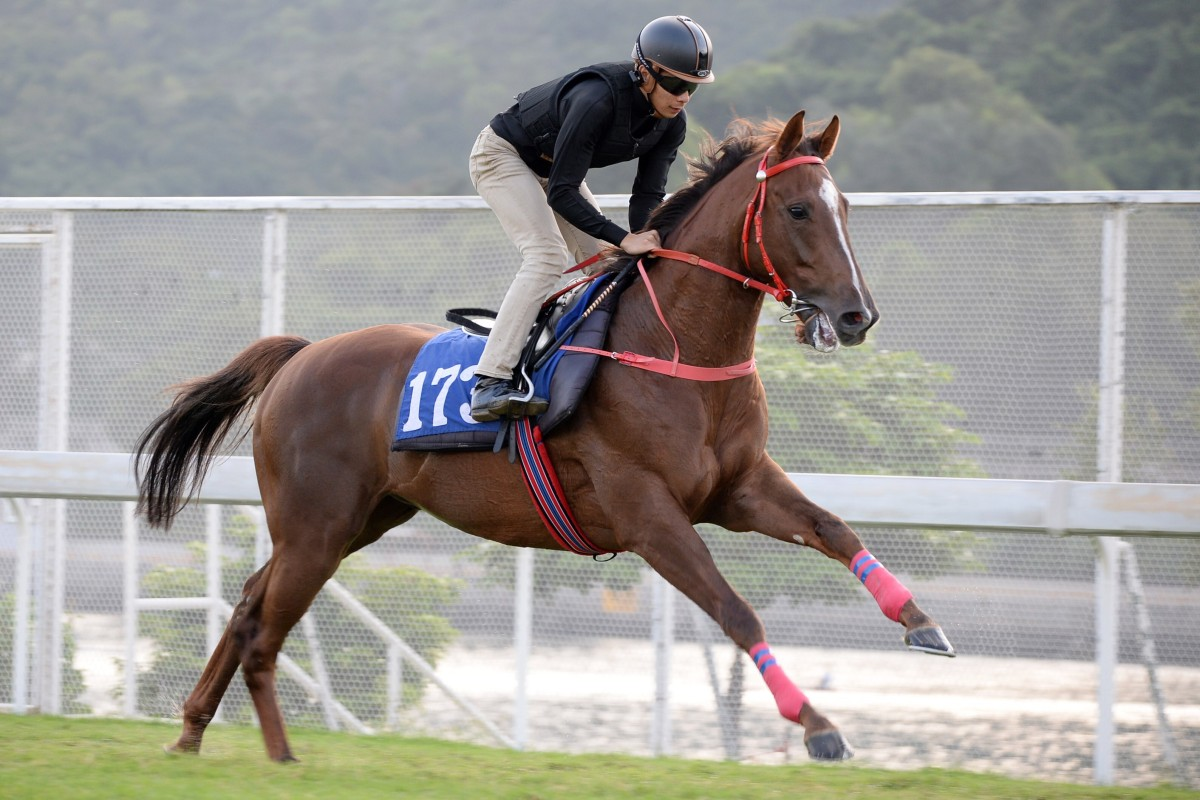 Amazing One Plus gallops under Derek Leung at Sha Tin on Monday. Photos: Kenneth Chan