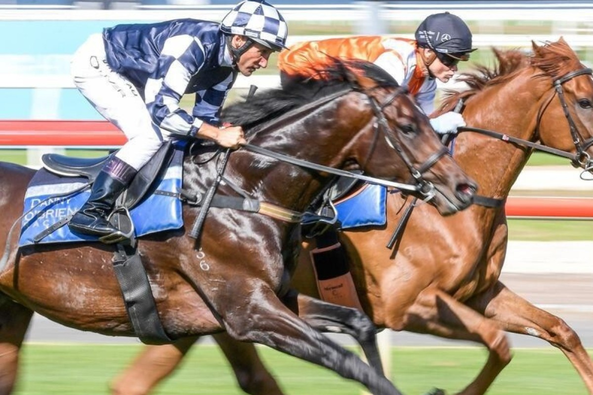Russian Camelot works alongside stablemate Vow And Declare. Photo: Supplied.