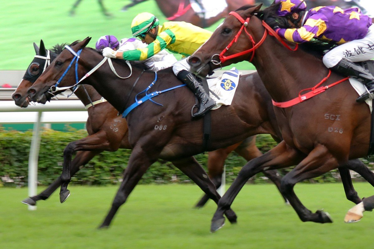 Sky Darci (yellow silks) wins the Class One Chevalier Cup at Sha Tin in November. Photos: Kenneth Chan