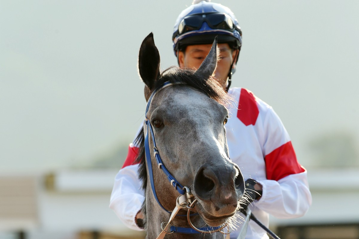 Classique Legend during his short-lived Hong Kong career. Photos: Kenneth Chan