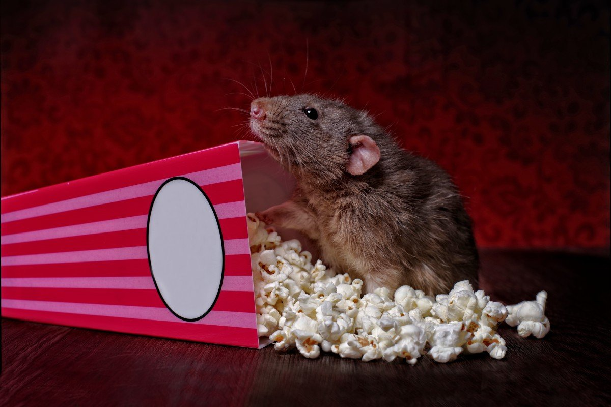20 Movies About Rats We Ve Grown To Love From Ratatouille To Pokemon Yp South China Morning Post