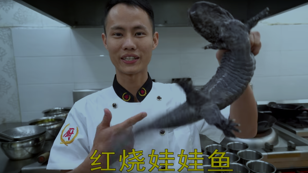 Celebrity chef in hot water for cooking endangered salamander