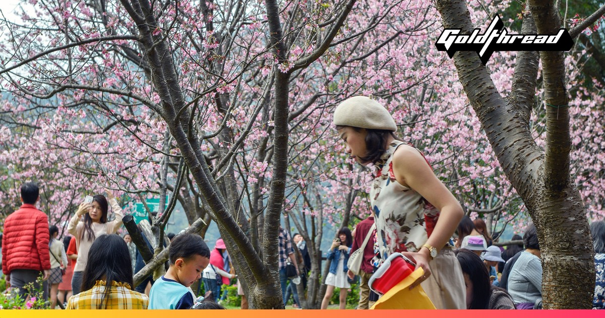 For cherry blossoms without the crowds, try Taiwan