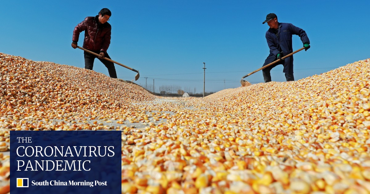 China S Corn Heartland Heilongjiang Grapples With Shortage Of Farm Workers South China Morning Post