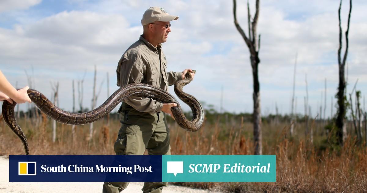 Snake hunters capture largest python in Florida Everglades