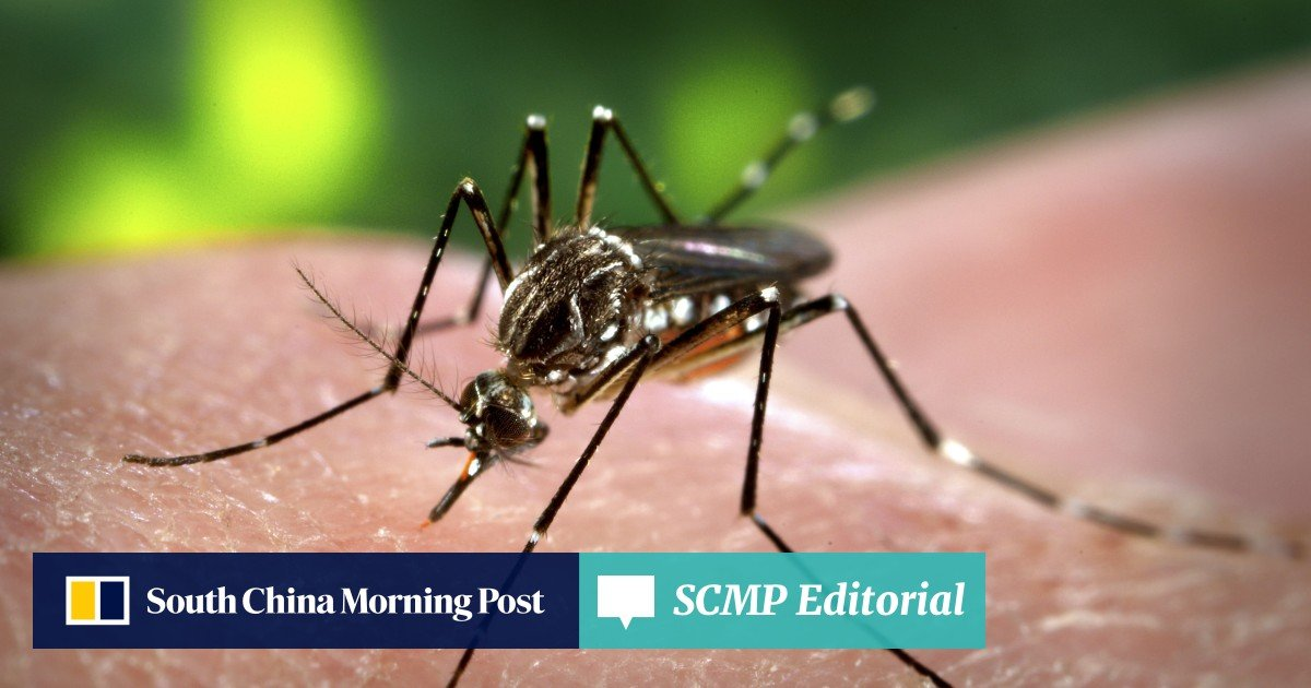 Dengue fever is now like the flu, WHO chief says, calling on