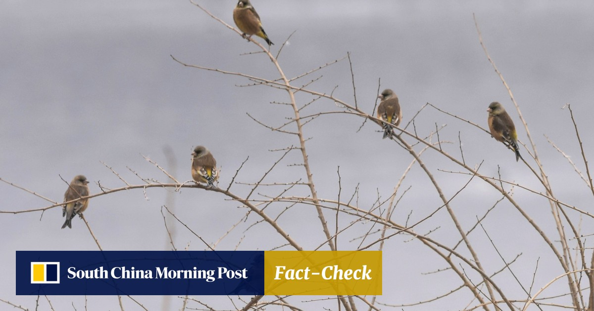Birds of Beijing: China's capital is important point on 'avian super
