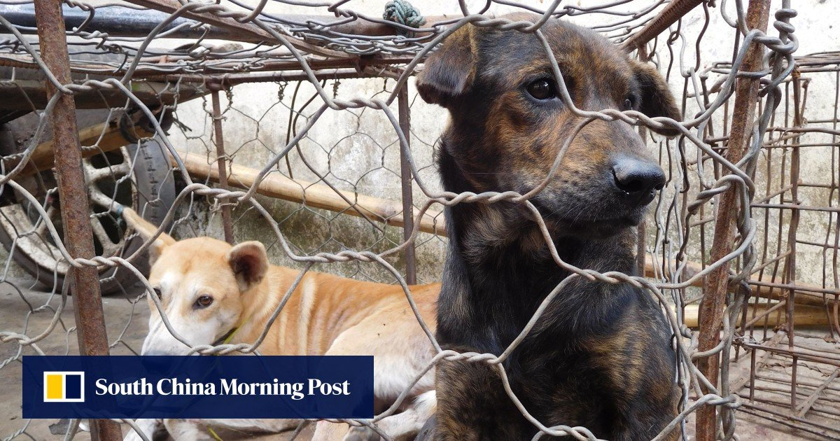 Indonesia province bans consumption of dog meat - South China Morning Post