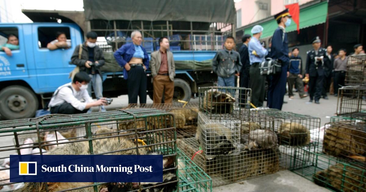 China Looks To Fast-Track Ban On Trade In Wild Animals In Coronavirus Crisis