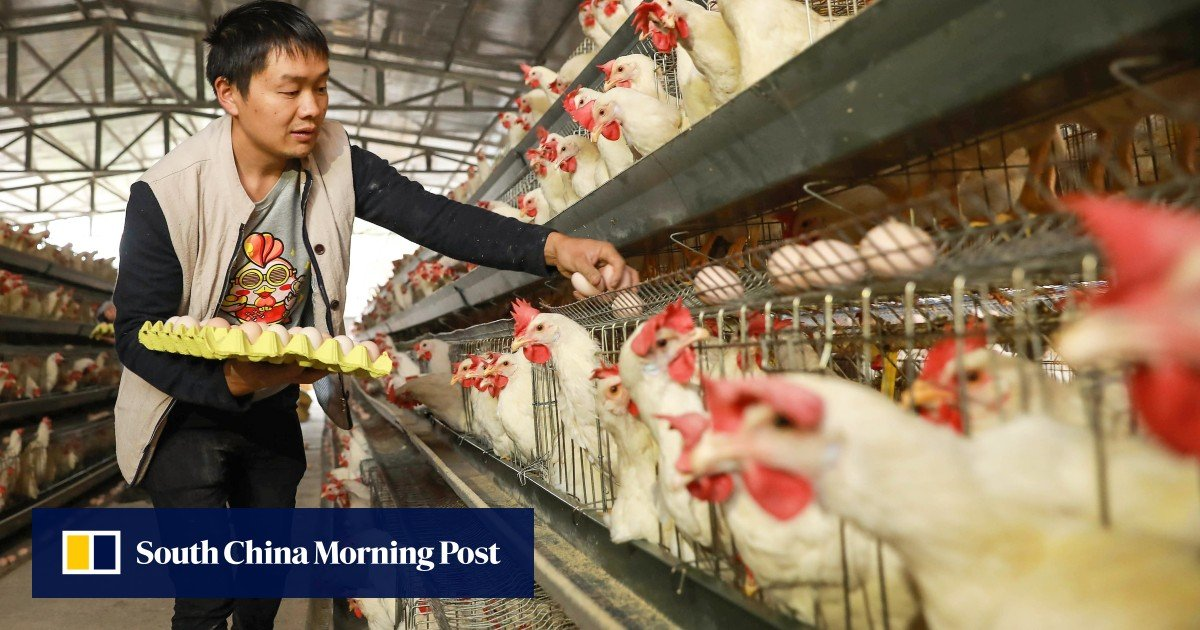 'Loss of China's poultry industry would very serious', says official amid virus