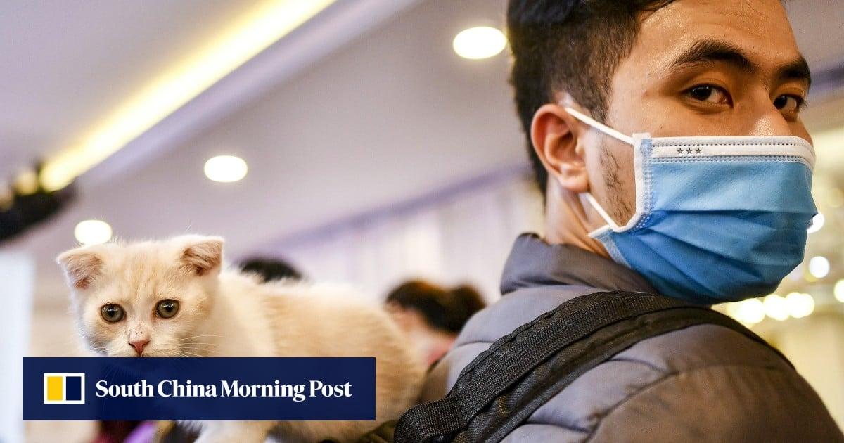 Coronavirus Singapore Start Up Thinks Cat Leukaemia Drug Could Be Covid 19 Cure South China Morning Post