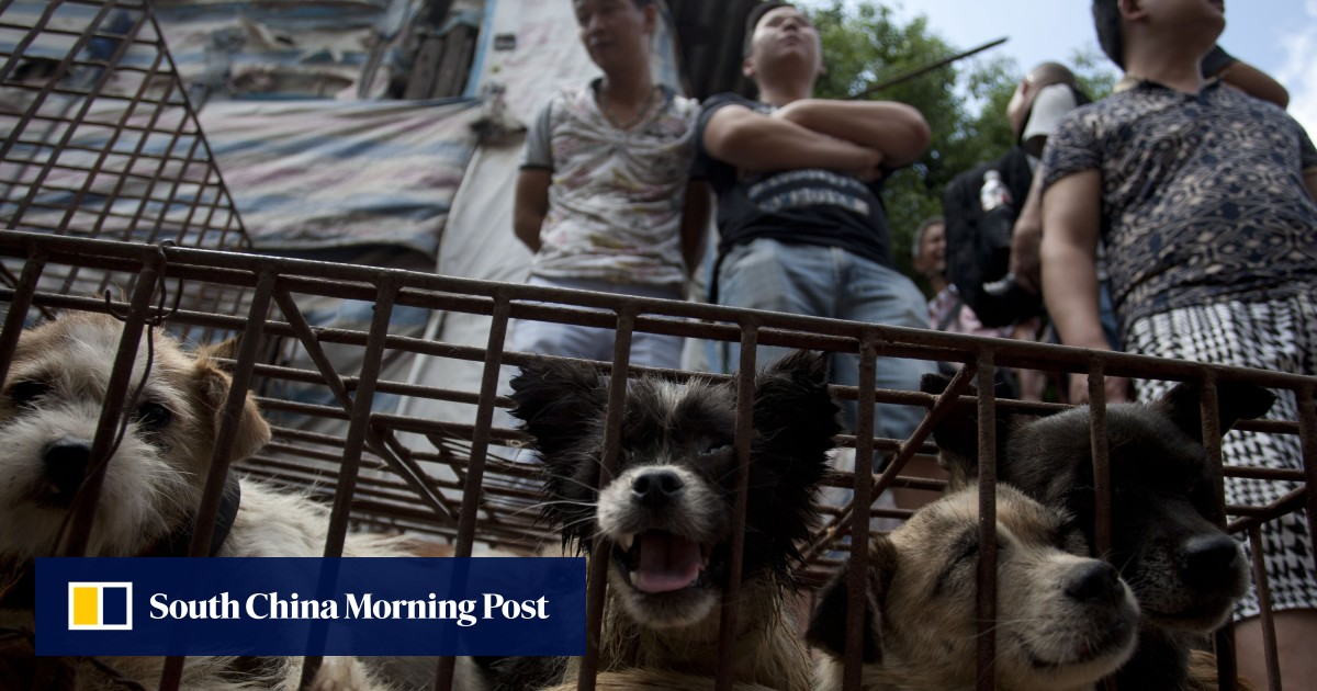 Dogs are pets, not food, says Chinese agriculture ministry