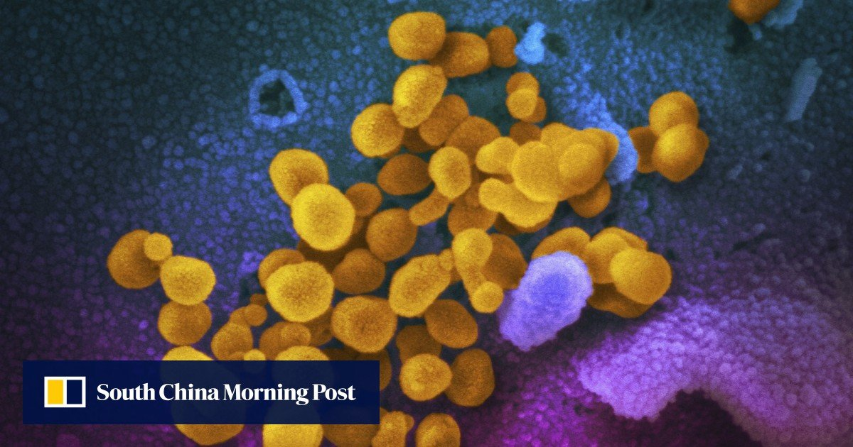 Infected monkeys were protected from coronavirus a month later - South China Morning Post