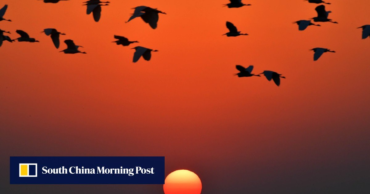 Outcry over revived dam plans for China's biggest freshwater lake - South China Morning Post